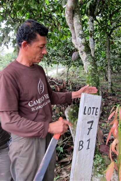 Kakao-Anbaugrundstück von Camino Verde © Sarah Krobath