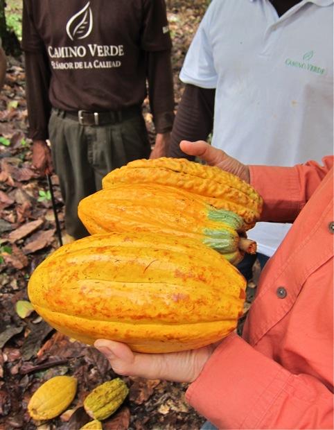 Verschiedener Kakao von einer Anbaufläche © Sarah Krobath