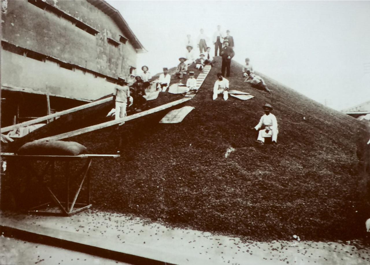 Bild eines Kakaobergs in einem Sammelzentrum 1905